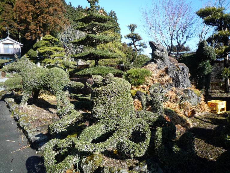 植木の管理